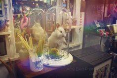 Rabbit (c)