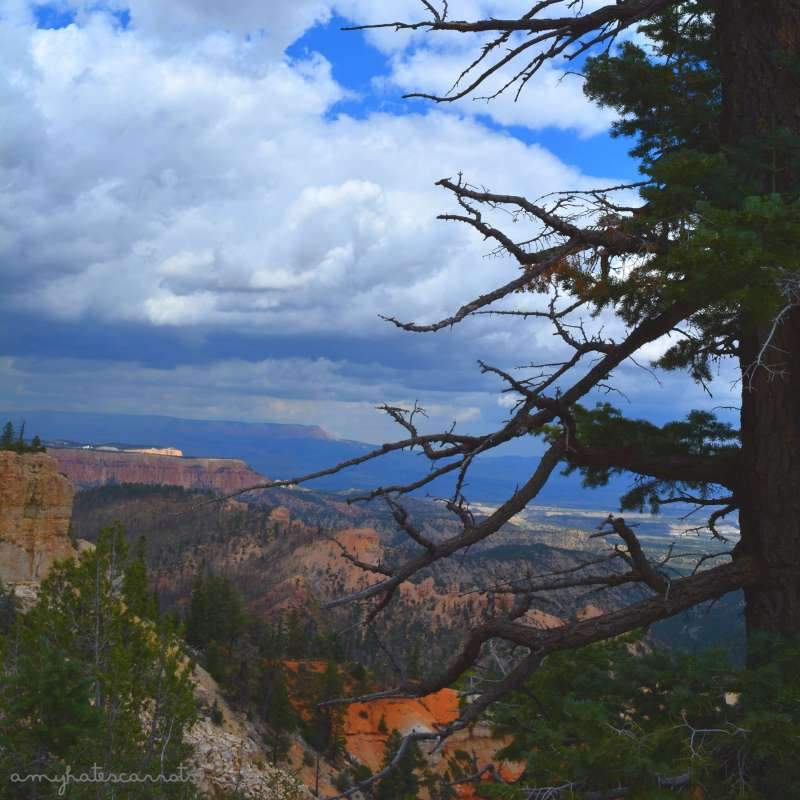 Bryce Canyon National Park is one of five gorgeous national parks throughout Utah. I visited them on my solo 48 state road trip and I cannot recommend enough that you go explore them all!
