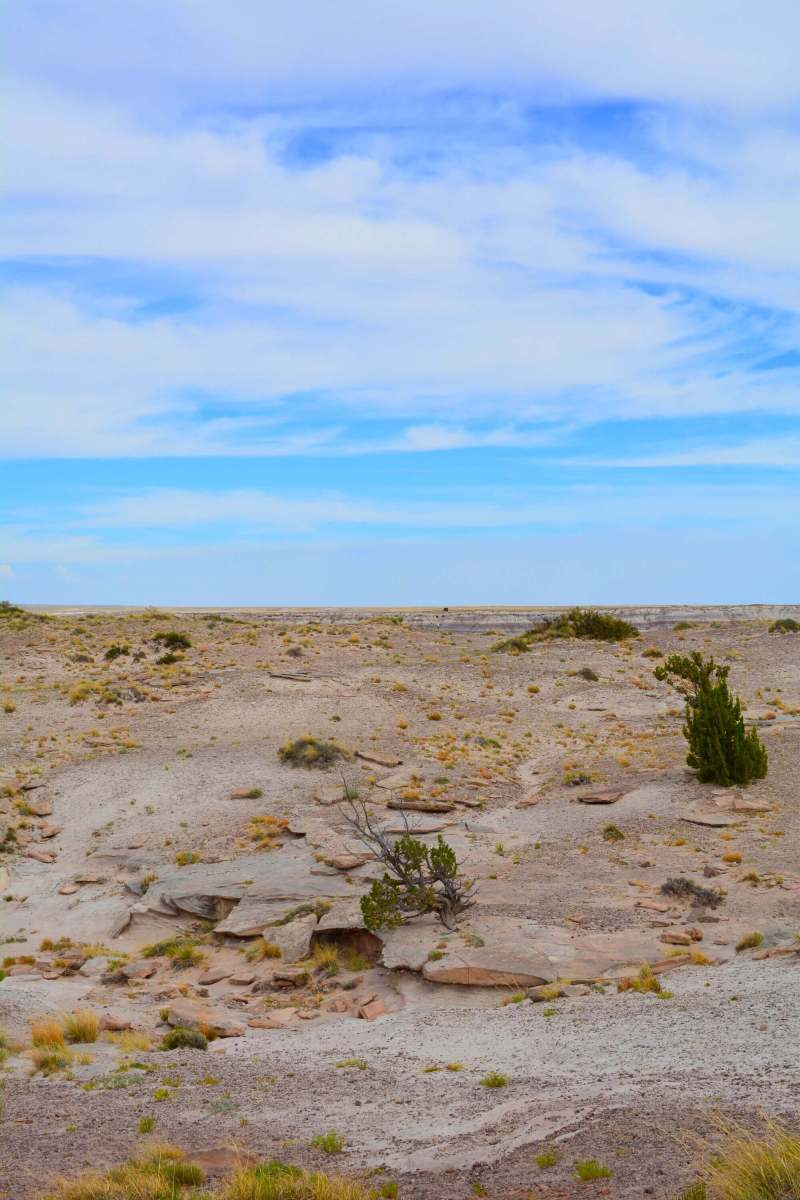 Stopping at The Petrified Forest National Park in Arizona during my solo 48 state road trip was an absolute must!