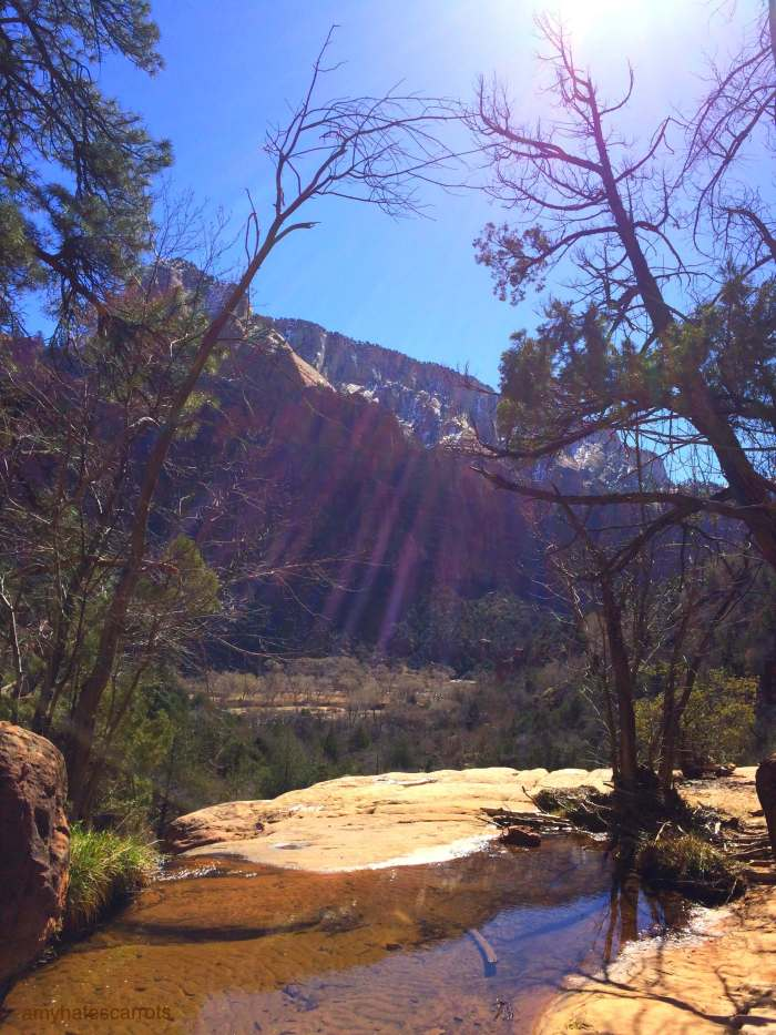 Here are some handy tips for planning a trip to Zion National Park [and some puuurdy photos to inspire you to go stat!]