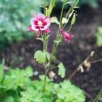 garden-may-2015-2