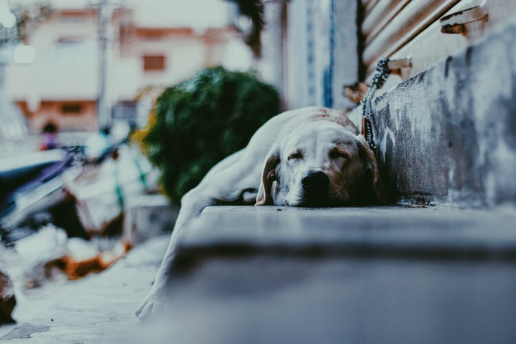 Amy Jean Blog -Morning Dreams- Dog Sleeping