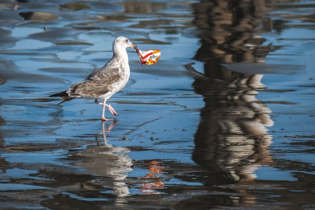 Amy Jean Blog - The Key Poem - Seagull with Garbage