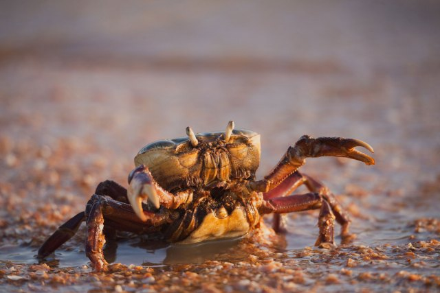 Amy Jean Blog - The Key Poem - Crab in Sand