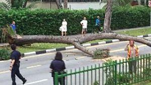 marine-parade-fallen-tree