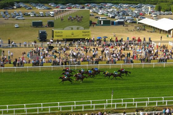 Royal Ascot horses on the track. Copyright Amy Laughinghouse