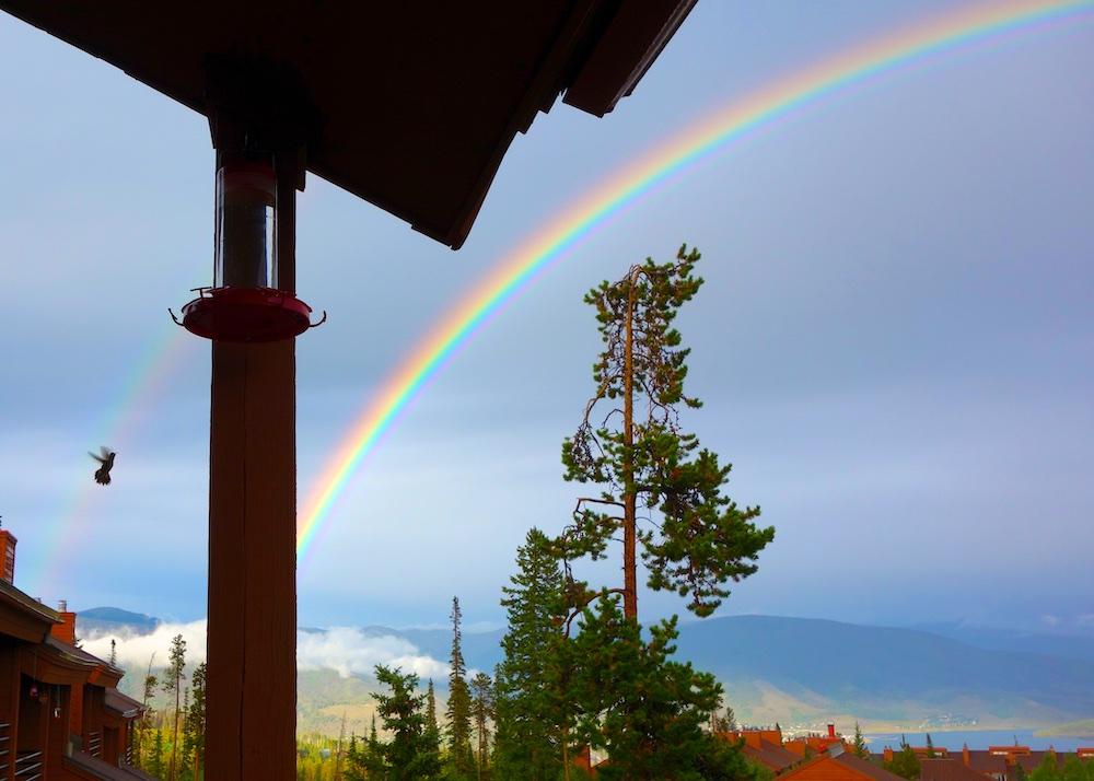 hummingbird and rainbow ryan gulch rd