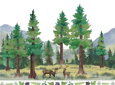 Elk and Redwoods