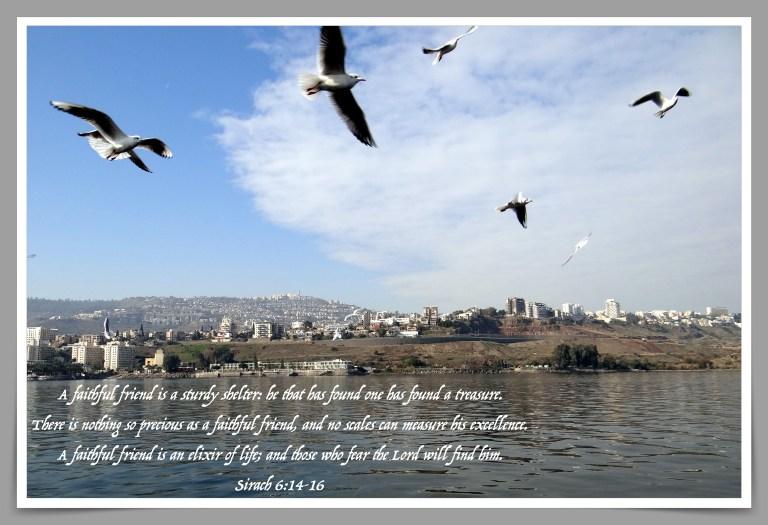 A good friend - Sirach 6:14-16