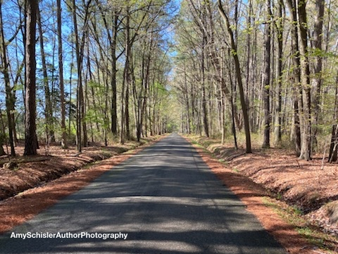 2020 deserted road