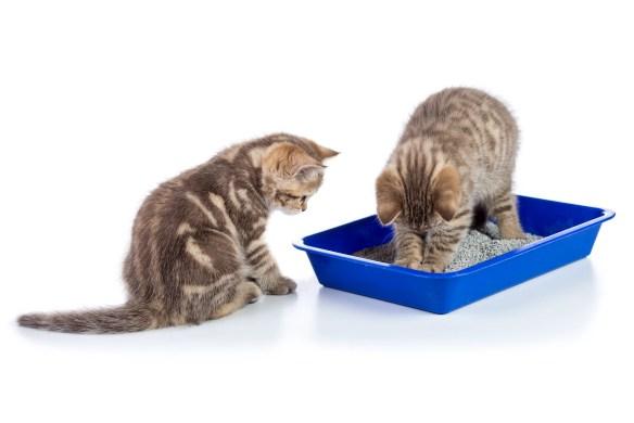 potty train cats
