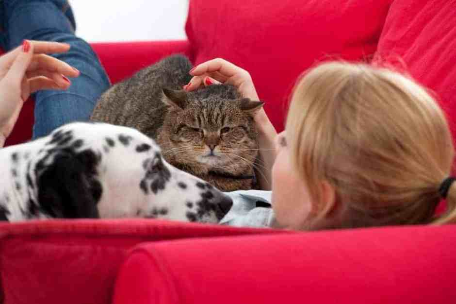 Lying on red sofa young woman with cat and dalmatian dog