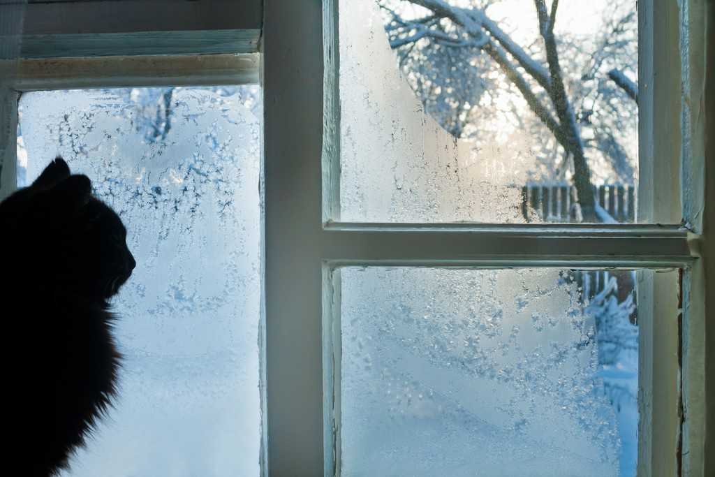 How Do I Frost My Bathroom Window, · Cold Protection For Hot Dogs Cats
