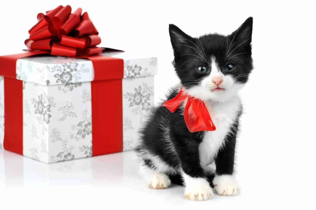 Pets Gifts Learn How To Give Cats Dogs As Gifts - Kitten escapes pet store display to join lonely puppy