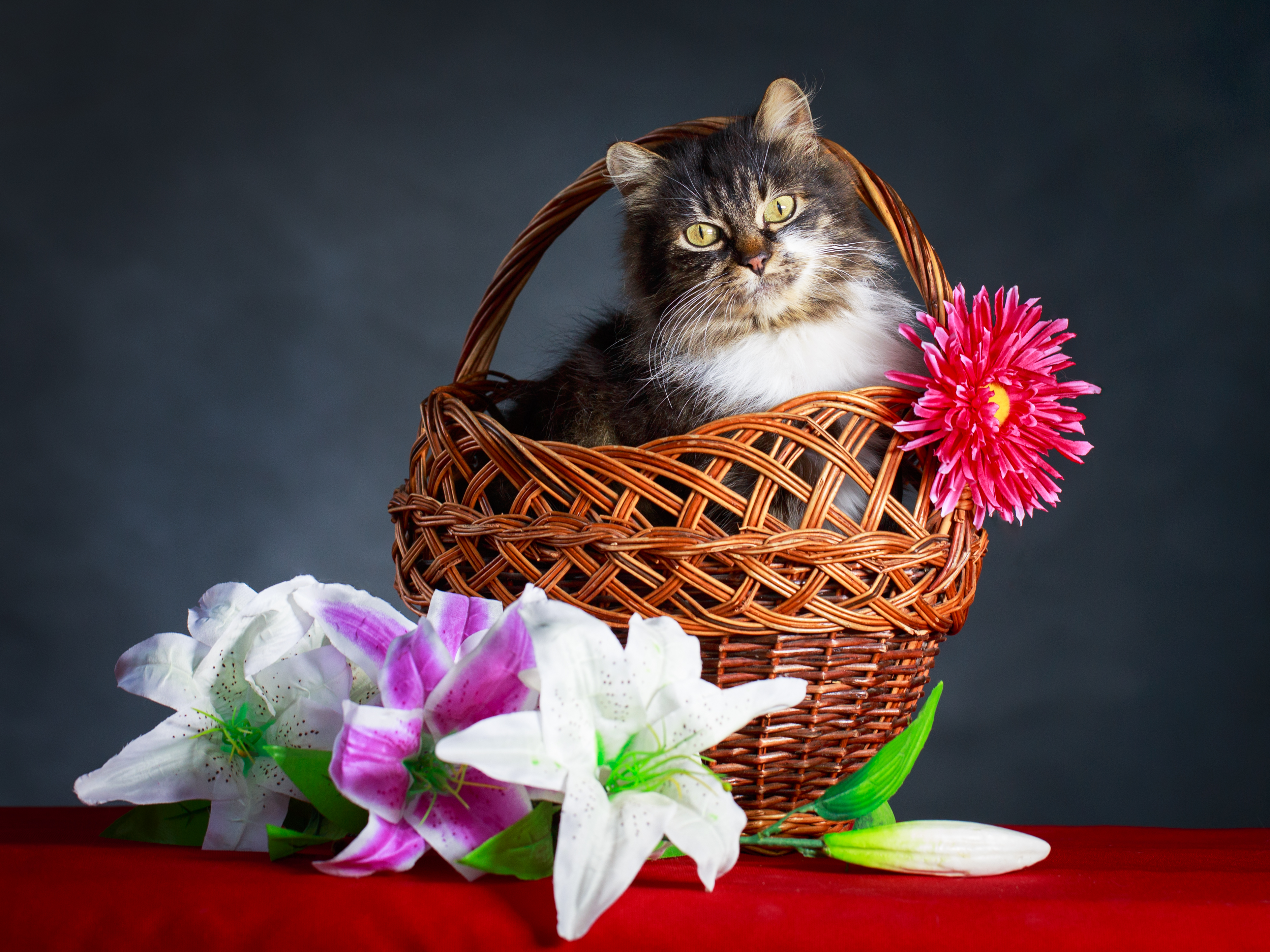 Easter lilies danger for cats a deadly combination whats wrong with this picture image courtesy of depositphotos izmirmasajfo