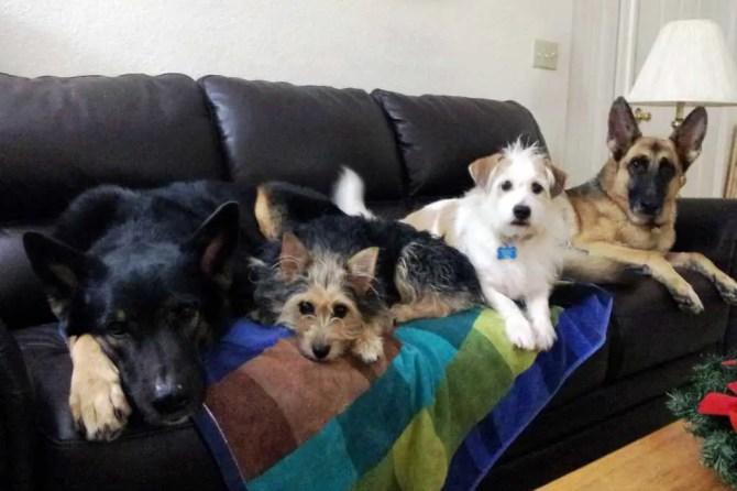 DebLaroche-Dogs