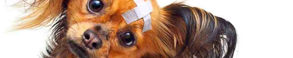 first aid pet insurance