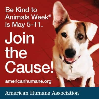 be-kind-to-animals-dog