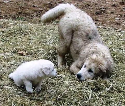 pet tail talk
