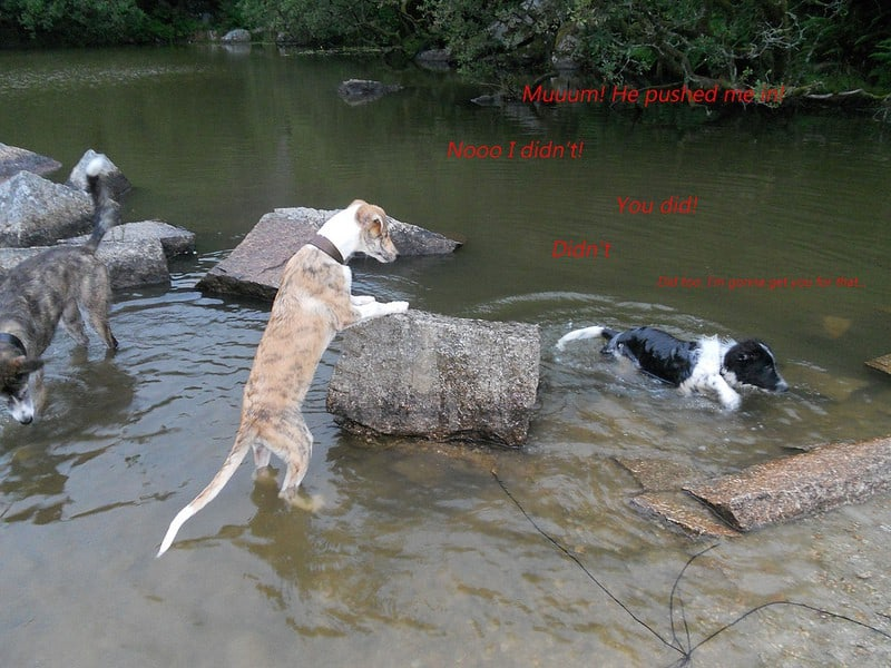 DogsInWater