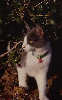 Outside kitten