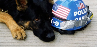 911-dog