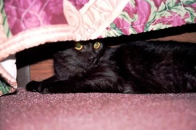 black cat under bed