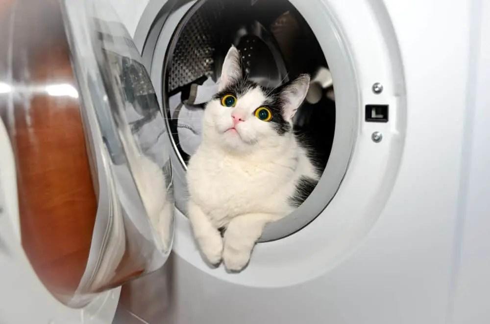 washing machine cat
