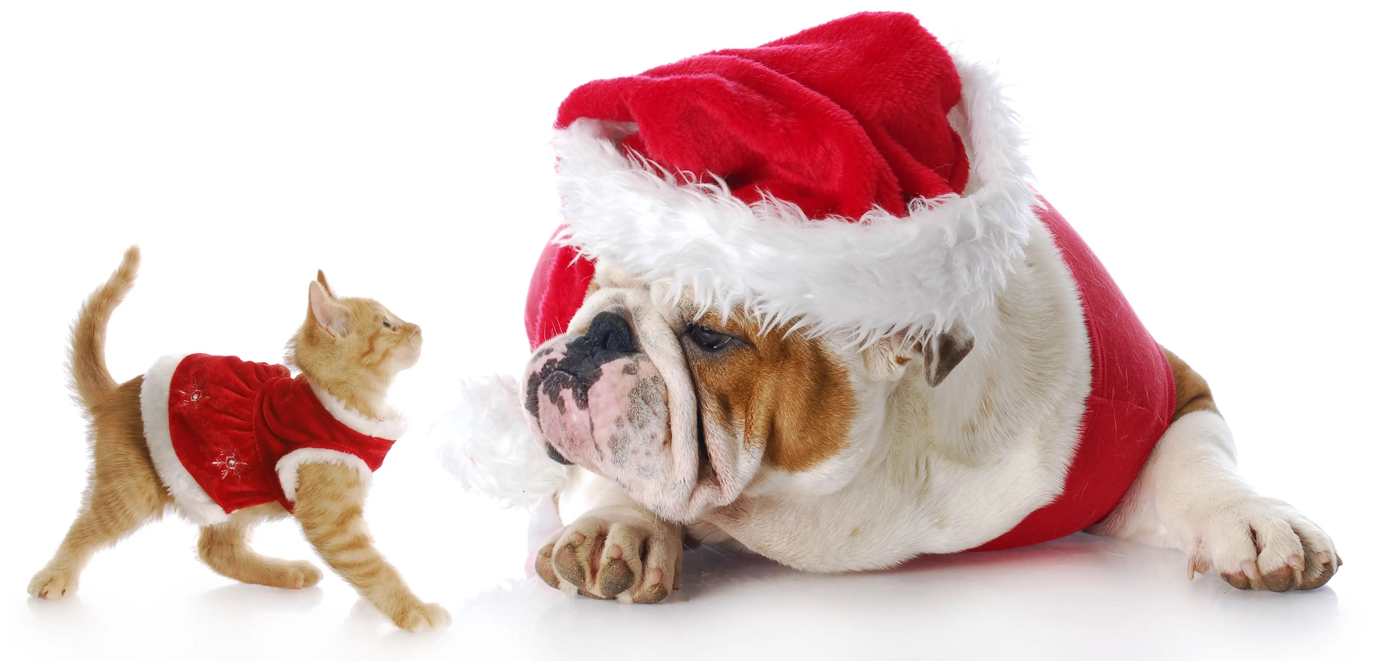How To Create Pet-Safe Holidays