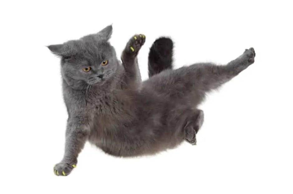 cat falls