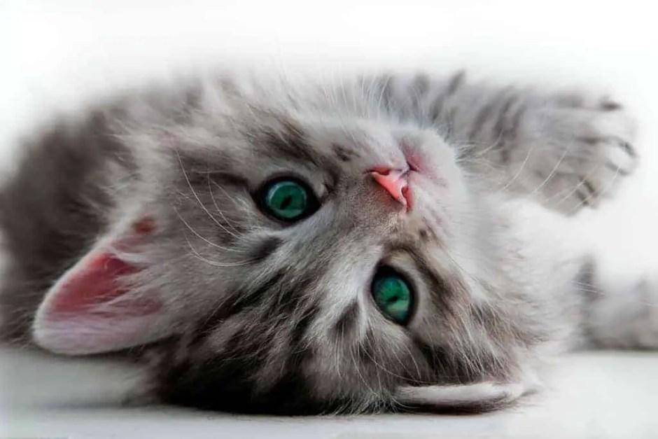 KittenFace_2186038_original