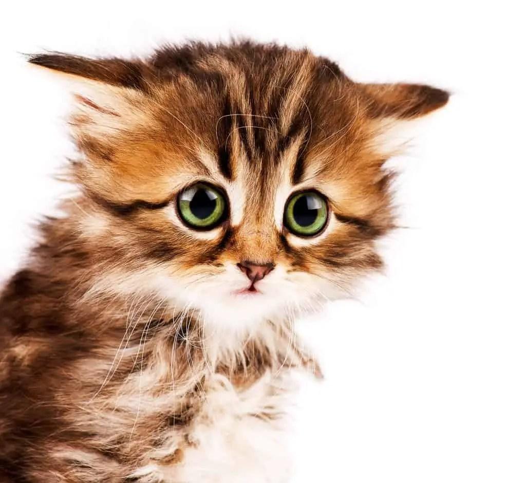 How To Adopt Kittens 10 Kitten Adoption Do S Dont S