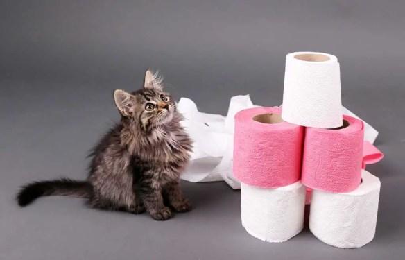 cats toilet paper