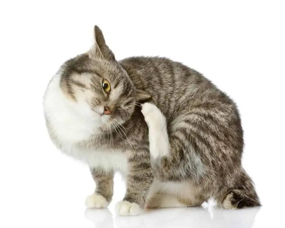 CatScratching_sm