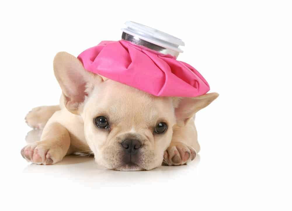 Home Remedies For Puppies With Diarrhea And Vomiting