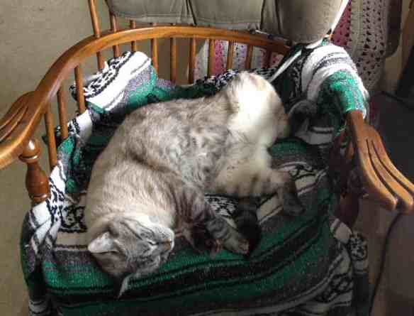 why cats sleep so much
