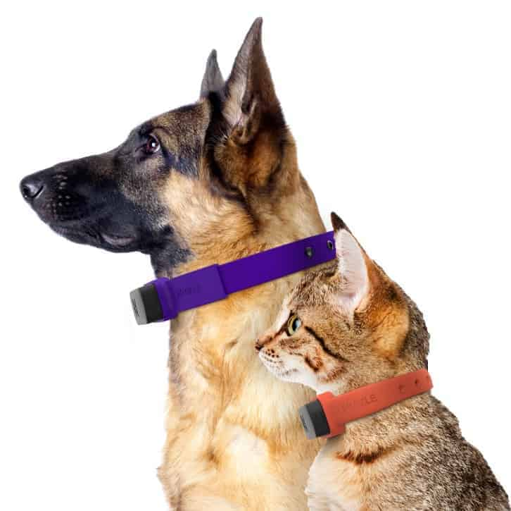 Pet tracking collar from Nuzzle