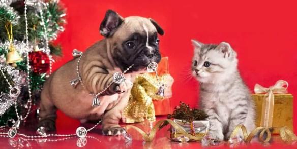 pet proof holidays to keep pets safe