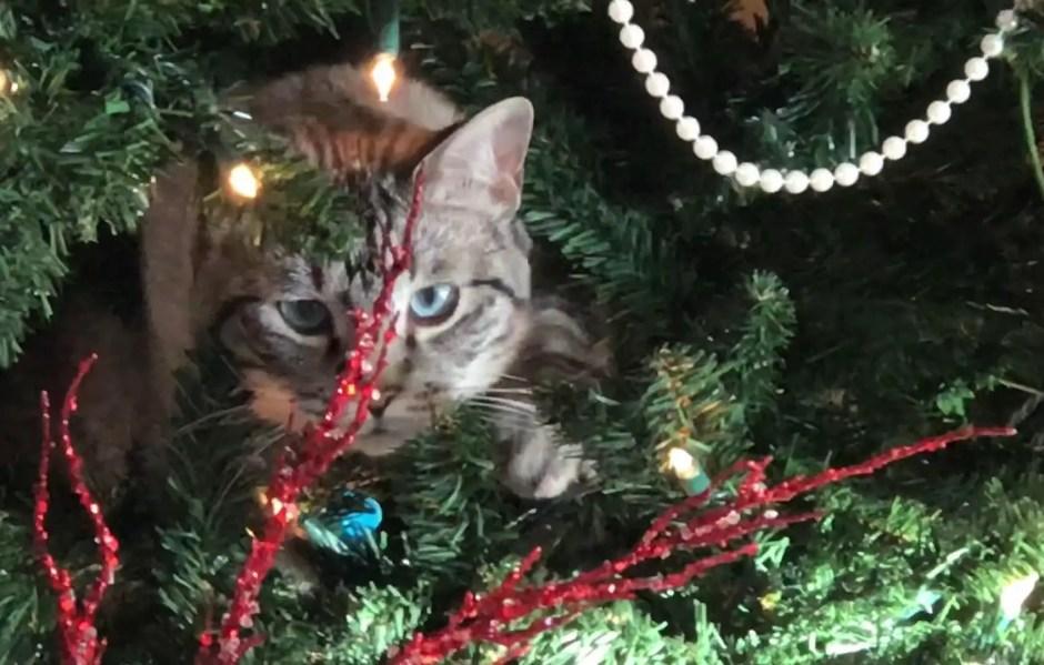 cat safe chrismas tree
