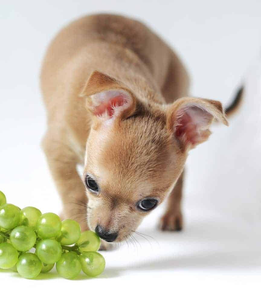 Keep poisonous grapes out of dog reach.