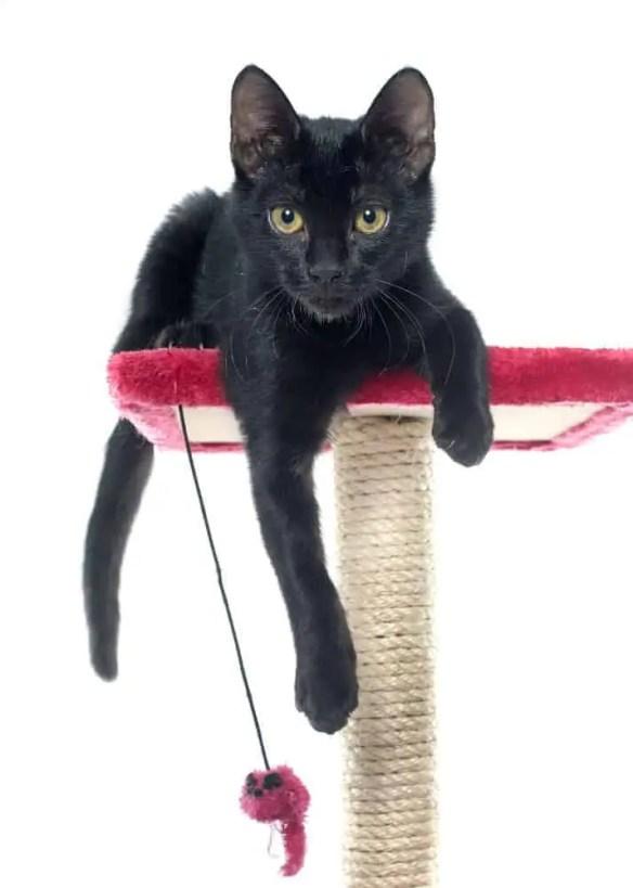 Black kitten on red cat tree.