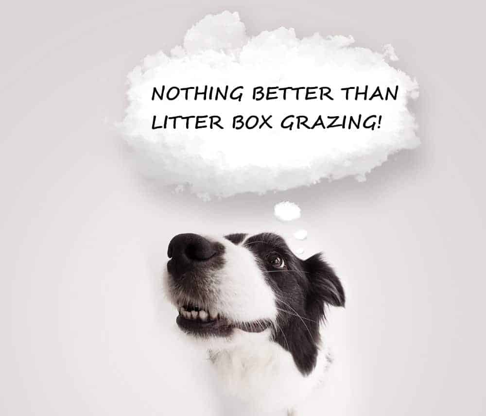 dogs litter box grazing