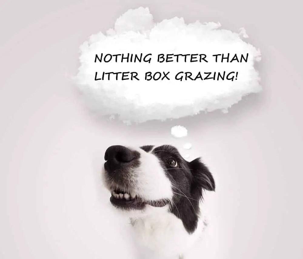 dogs litter box grazing