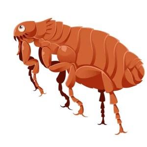 Drawing of cartoon flea