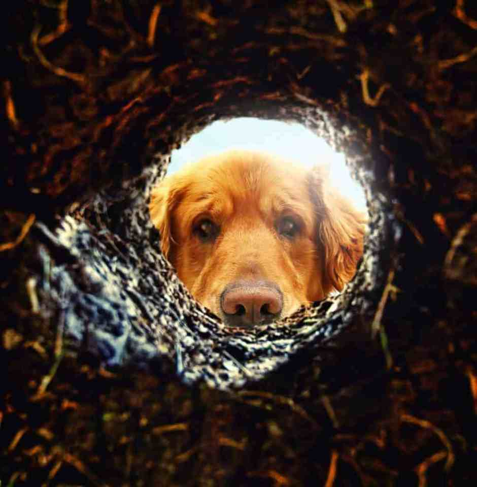 Dog Digging Disasters Why Dogs Dig Amp How To Stop Excavations