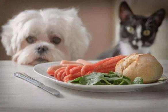 pets gobble food