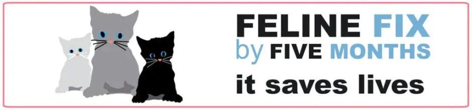 feline fix by five