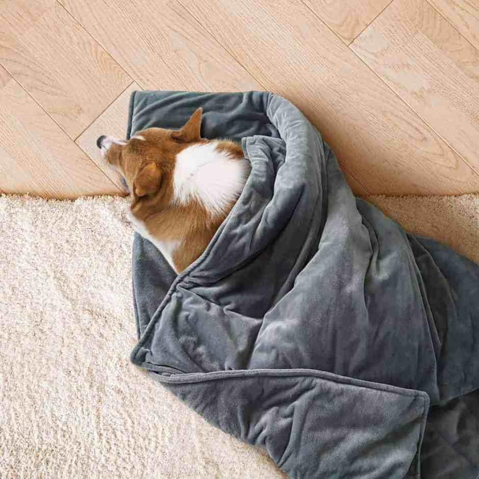 Canine Coddler