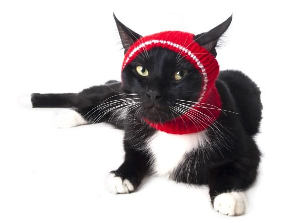 hat cat halloween