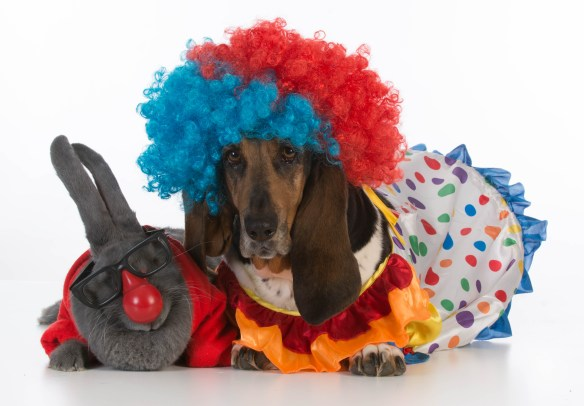 halloween dog clown & rabbit
